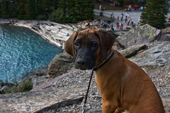 my photography assistant (backpackphotography) Tags: blue lake canada jasper banff np nationalparks lanscape moraine banffnationalpark glacial morainelake banffnp backpackphotography