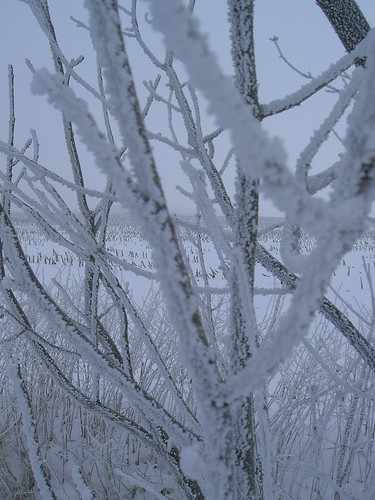 winter 031