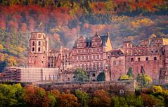 Heidelberger Schloss (Michele Naro) Tags: heidelberg schloss herbst badenwürttemberg deutschland d80 germania germany heidelbergerschloss nikond80 samyang85mmf14
