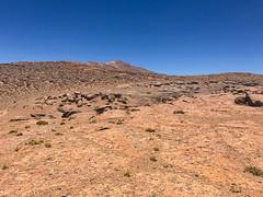 Alien. (david takes photos) Tags: losflamencosnationalreserve reservanacionallosflamencos riochico atacama chile sanpedrodeatacama regióndeantofagasta