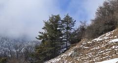 Vollèges (bulbocode909) Tags: valais suisse vollèges valdentremont nature montagnes arbres forêts hiver neige paysages brume nuages vert bleu