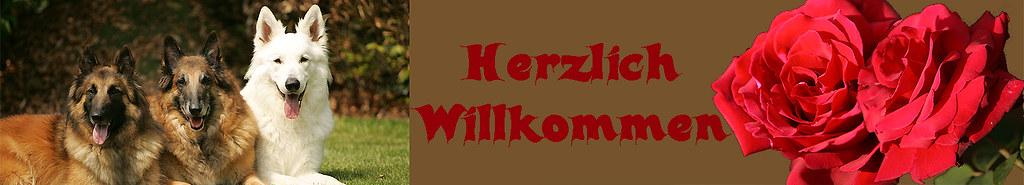 _jpg-30.06.09-Banner-herzli