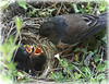 hungry mouths to feed...July/09 (axiepics) Tags: two baby bird nature birds mouth interestingness babies nest image feeding sold wildlife junco explore getty exploreinterestingness hungry mouths gettyimages beaks gettyimage explored i500 juncoes gettyimagescom vosplusbellesphotos explore454july20 gettyimagesold gettychoiceaugsept09 454onmondayjuly202009 gettyimagesaxiepics gettyimageaxiepics augtooct09getty licensedforsale gettyimageslicensedforsale ©copyrightalexskellyallrightsreserved