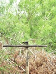 Bird Blind - Pedernales Falls
