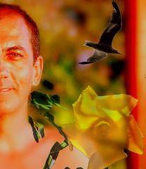 fluyendo con los vientos del cambio ... cerca del Amor (AmoryLuz ♥ Love&Light) Tags: selfportrait flower yellow retrato seagull portait flor autorretrato gaviota amarilla