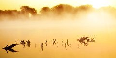 Sunrise (96dpi) Tags: water birds fog sunrise wasser nebel 85mm vgel vivitar sonnenaufgang samyang groundfog bodennebel