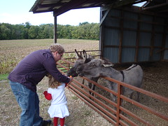 Dad & Lilliann Feeding A Donkey