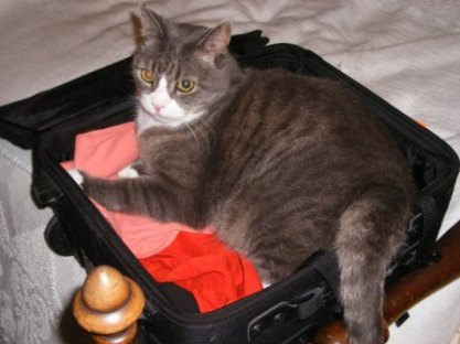 LB in my Suitcase Again!