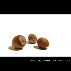 Nuts anyone? (Martinca) Tags: autumn white macro fall forest square nuts shell hazel cob snowwhite onwhite hazelnut martina filbert nocciola noisette cobnut anawesomeshot haselnus lešnik