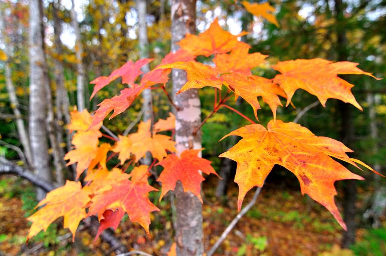 leaves_0027