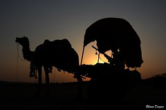 Sunset at Pushkar, Rajasthan, India (Bhanu Devgan) Tags: sunset india rebel camel pushkar rajasthan bhanu awesomeshot pushkarfair devgan xti golddragon platinumphoto colorphotoaward impressedbeauty concordians ravanhatha ubej mygearandmepremium mygearandmebronze mygearandmesilver mygearandmegold mygearandmeplatinum mygearandmediamond