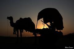 Sunset at Pushkar, Rajasthan, India (Bhanu Devgan) Tags: sunset india rebel camel pushkar rajasthan bhanu awesomeshot pushkarfair devgan xti golddragon platinumphoto colorphotoaward impressedbeauty concordians ravanhatha ubej mygearandmepremium mygearandmebronze mygearandmesilver mygearandmegold mygearandmeplatinum mygearandmediamond
