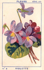 milliat fleurs008