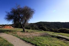 Solo tree (Håkan Dahlström) Tags: california usa tree verde green nature grass groen unitedstates united vert vista states grün devonshire grön grn