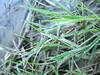 rugiada sull'erba