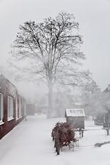 Hé, het sneeuwt! (KennethVerburg.nl) Tags: christmas winter white snow holland netherlands dutch sneeuw nederland wit flevoland almere almerehaven
