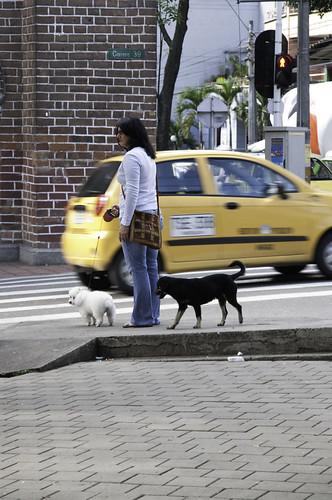 Un perro criollo que estuvo atento a los movimientos de una perrita french poodle acompañada por su ama al Parque de Boston, decidió acercársele justo en el momento en que se disponían a abandonar el lugar.