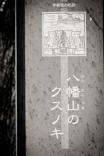 #3 The Giant Camphor of Hachimanyama