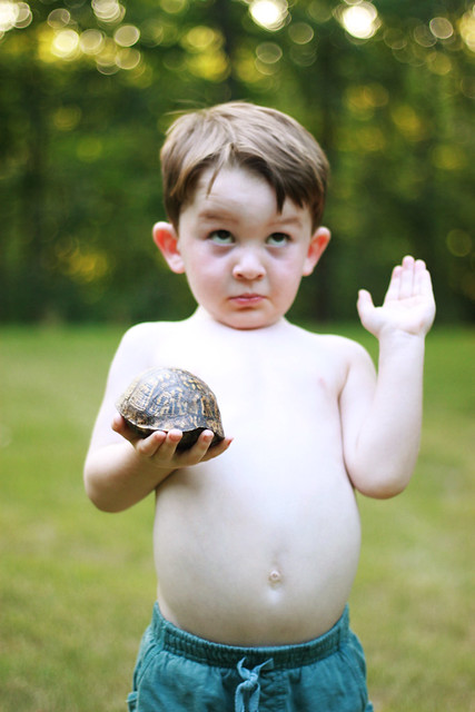 uncertle the turtle