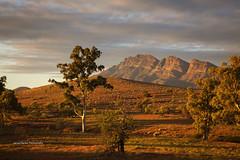Elder Range (Jacqui Barker Photography) Tags: flindersranges elderrange southaustralia mountainrange morninglight earlymorning landscape gumtrees outbackaustralia australia day
