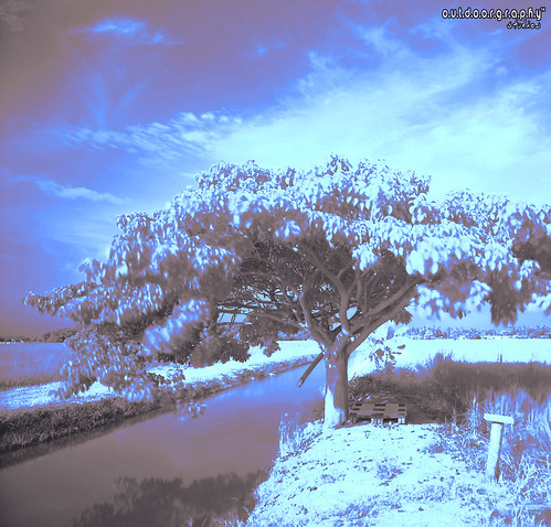 Lonely Tree Series #1 (IR)