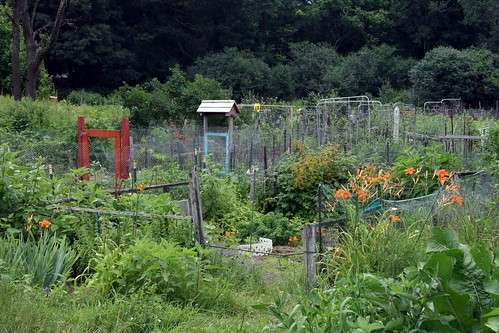 victory gardens 3