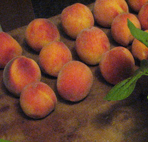 If you cant eat or process the peaches you buy immediately, spread them out on a flat surface in a cool place (away from direct sunlight) to slow down the ripening (and rotting) process.