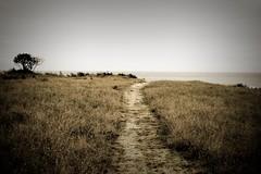 Wailuku Path (Pi