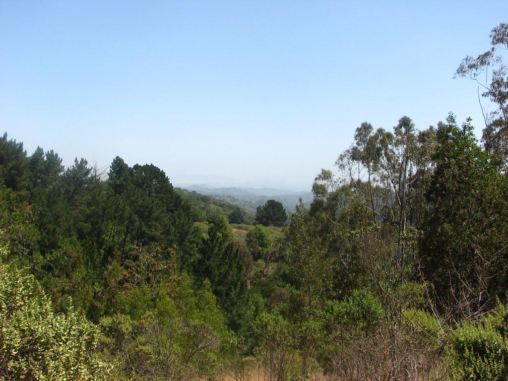 Redwood Park!