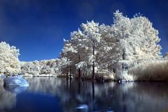 Westpark, infrared (Fimbulfamb) Tags: park trees summer lake munich münchen bayern bavaria see sommer westpark infrared bäume cokin infrarot