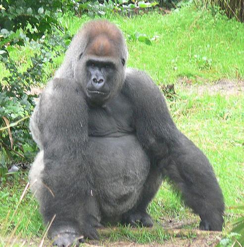 Gorilla safaris holidays