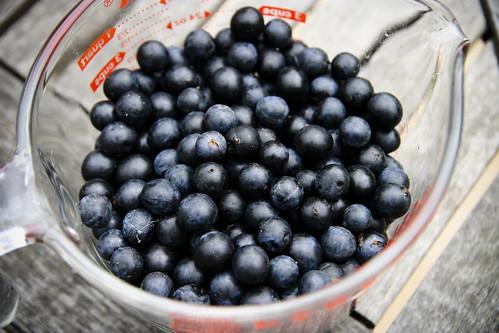 Sloe Harvest