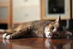 Cute face... (Hina :-)) Tags: baby cute home cat nap floor sleep adorable kitty lovely maomao tabbie referenceforqueenie