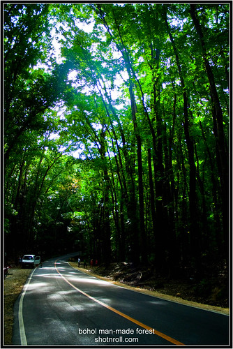 Bohol Man-Made Forest