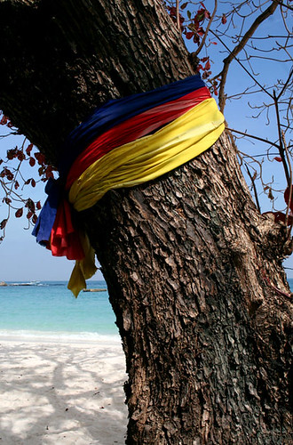 Spirit tree on Ao Wai, Ko Samet