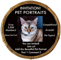 PET PORTRAITS INVITE CODE No.1-3 (by designs 4U in mind)