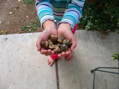 We love acorns!