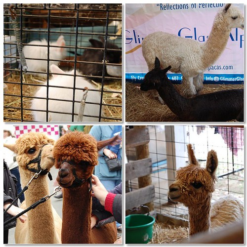 Rhinebeck animals