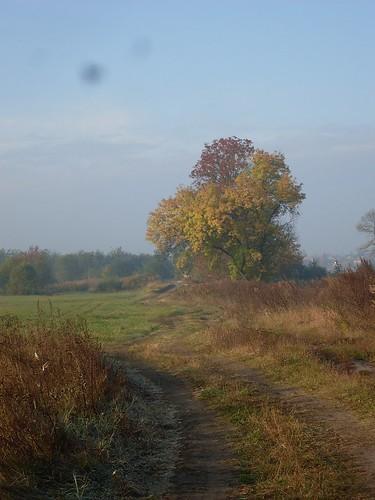 ősz 002