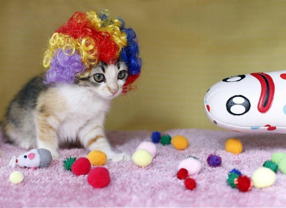 cat-glamour-06