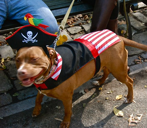 October 25, 2009 at Tompkins Square Dog Run in New York City.