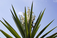 016 (thi.g) Tags: blue sky plant flower green islands sony cybershot palm mallorca thig balearic thilogierschner