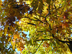 Fall Colors Boulder   DSCN0289