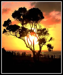 Pastel Farewell, San Diego Silhouette (moonjazz) Tags: pastel farwell california coast silhouette sun nature tree people landscape travel view sandiego clouds peaceful sea pacific horizon happy lovely yellow pink colour color walk photography perfect joy