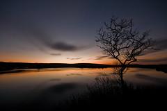 BroadpoolReflection (andyathlon) Tags: sunset tree water pool swansea clouds reflections colours sony sigma gower broad 1020 bryn cefn broadpool a700 thepinnaclehof tphofweek24 thepinnacleblog
