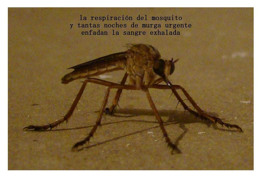 la respiracion del mosquitob