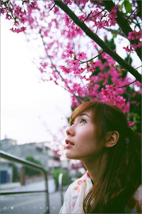 小香。櫻景