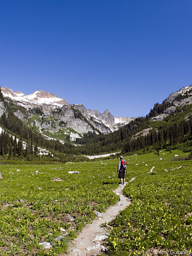Spider Meadow 006
