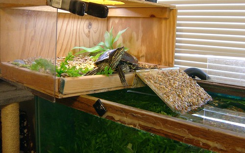 Small Turtle Aquarium Setup : Feed a varied diet. Pellets should only make up a small portion, you ...