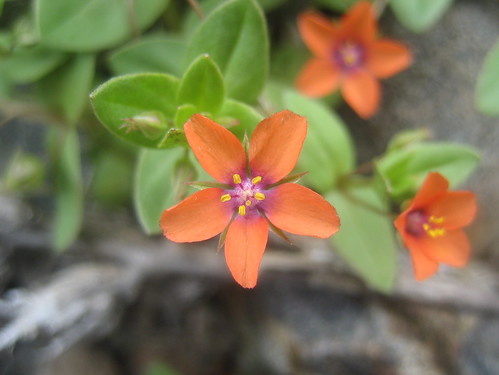 Dainty Orange Wildflowers